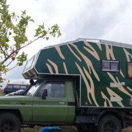 Buschtaxi-Treffen- Zebra in Grün